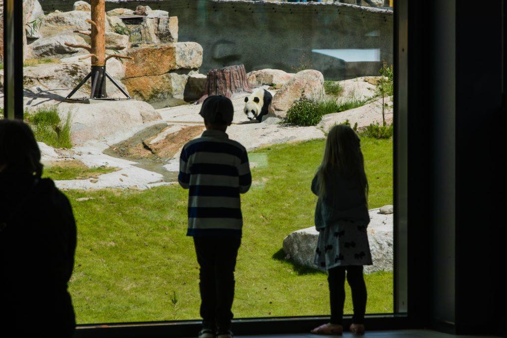 Ähtäri zoo lapset ihailemassa pandaa